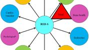 The RED-S Flag. Relative Energy Deficiency in Sport - Can physiotherapists play a key role in early detection?