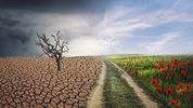 """Climate change and State aid: Making """"green investments"""" great (again)!"""
