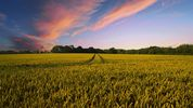 Shaping the future of farming in England