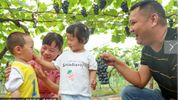 Fruit sweetens up city's economy in SW China's Sichuan