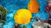 Día Mundial de los Arrecifes 2021