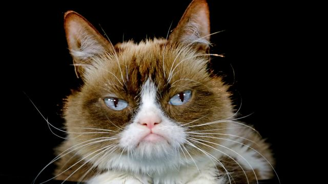 Grumpy Cat has the Last Word in 710K Win featured image