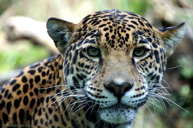 Jaguar leaps into Lyft featured image