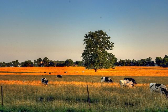 £200m farmland sale to test Brexit effect on prices featured image