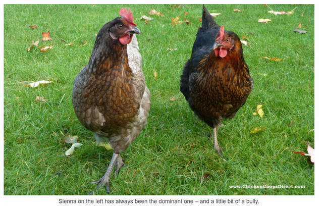 Lessons in marketing from Chicken Coops Direct! featured image