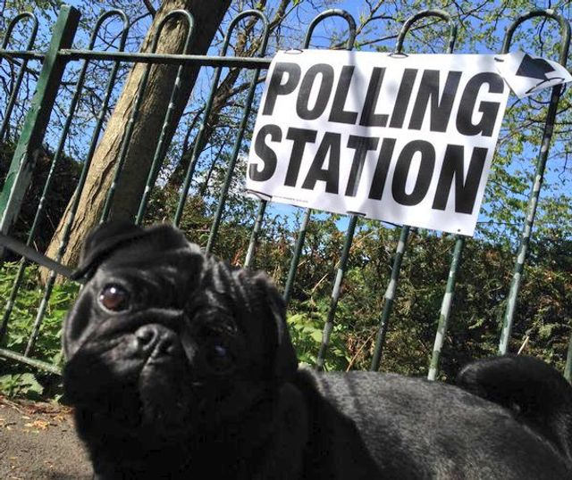 The power of the poll...and the pug! featured image