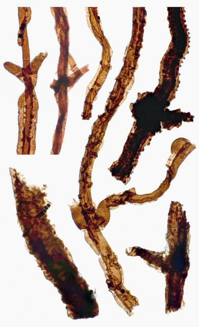 440 million year old fungi featured image