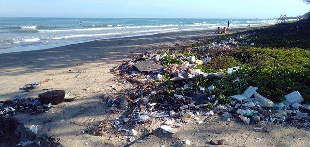 Are you having microplastics with your seafood? featured image
