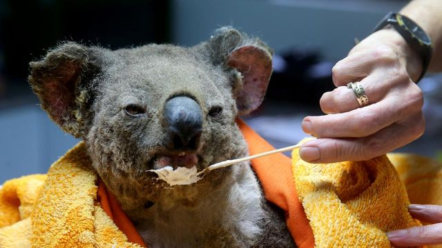 Bushfire crisis gives Aussies a sense of purpose featured image