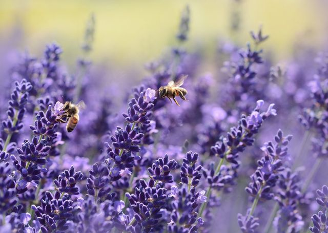 Help to save the bees - Earth Day - Bee Conservation Toolkit featured image