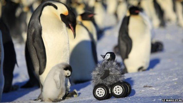 Using a remote control car to research Penguins. featured image