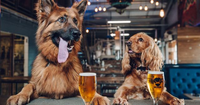 Pawternity Leave For All The BrewDog Crew! featured image