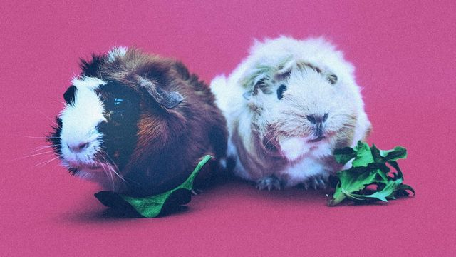 Be the Guinea Pig for New Policies at Work featured image