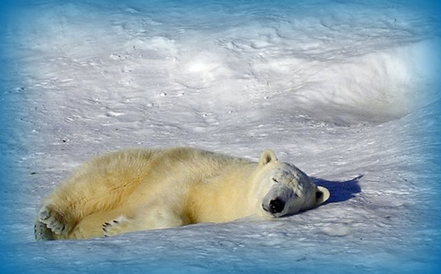 It's not just about Polar Bears..... featured image