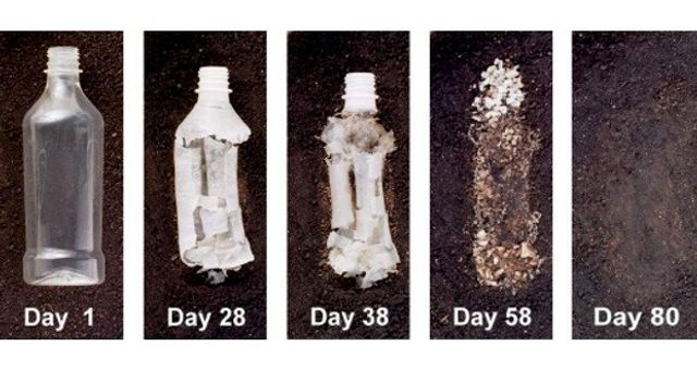 Hemp Bioplastic - The Solution to Pollution? featured image