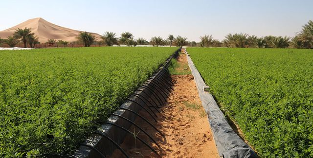 UAE leads the Agricultural Innovation Mission for Climate featured image
