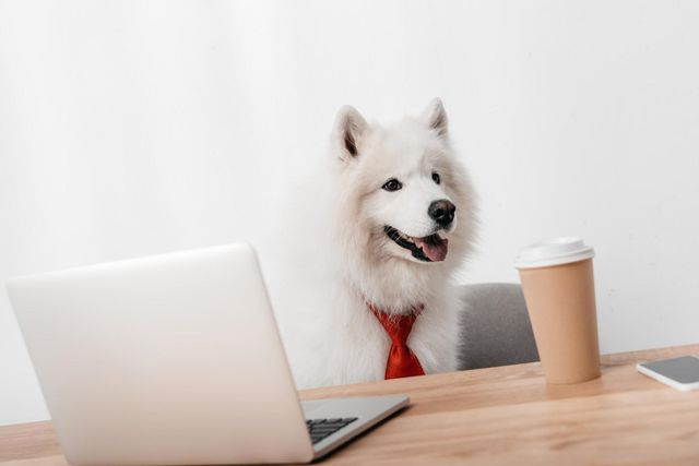 TAKE YOUR DOG TO WORK DAY: BEST PHOTOS OF PEOPLE BRINGING THEIR PETS TO THE OFFICE featured image