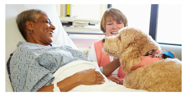 RCN publish new protocol on working with dogs in health care settings featured image