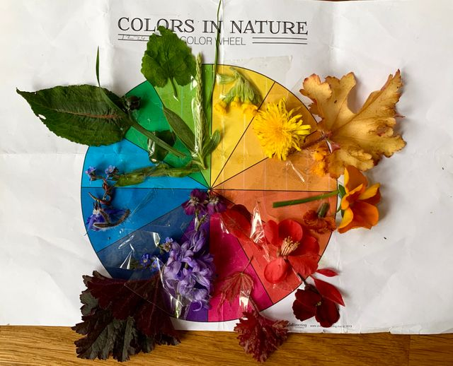 Nature walk idea #1: Match colours of nature to a colour wheel featured image