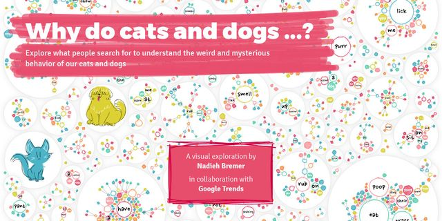 Why do cats and dogs? Understanding search terms for recruitment campaigns featured image