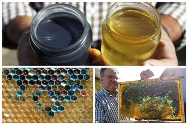Blue honey? featured image