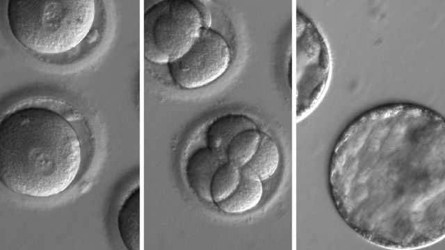 Human embryos edited to stop disease featured image