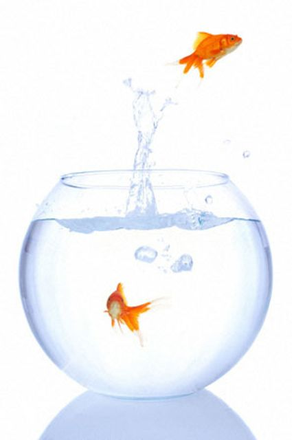 People Are Not Goldfish featured image