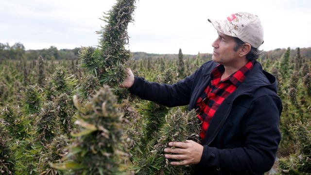 New York Farmers Set to Benefit from Selling Hemp to Medical Marijuana Companies featured image