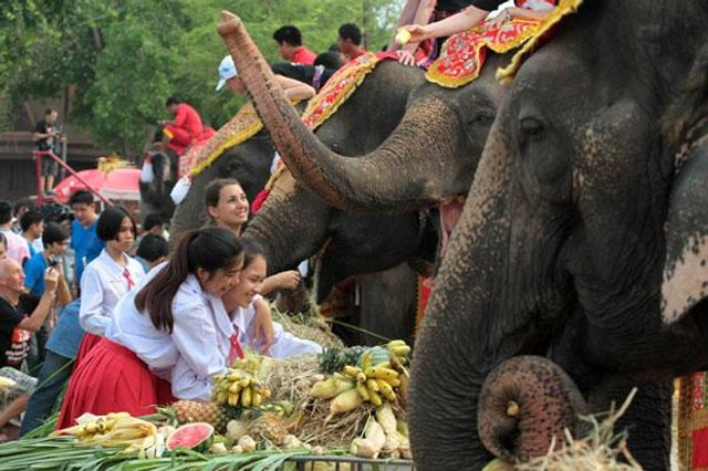 Feasts for Elephants featured image