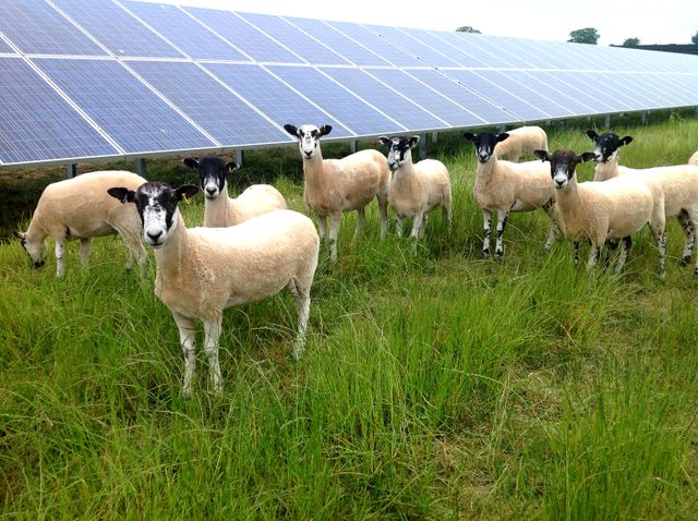Farmers awaiting solar subsidy build pressure on Irish government featured image