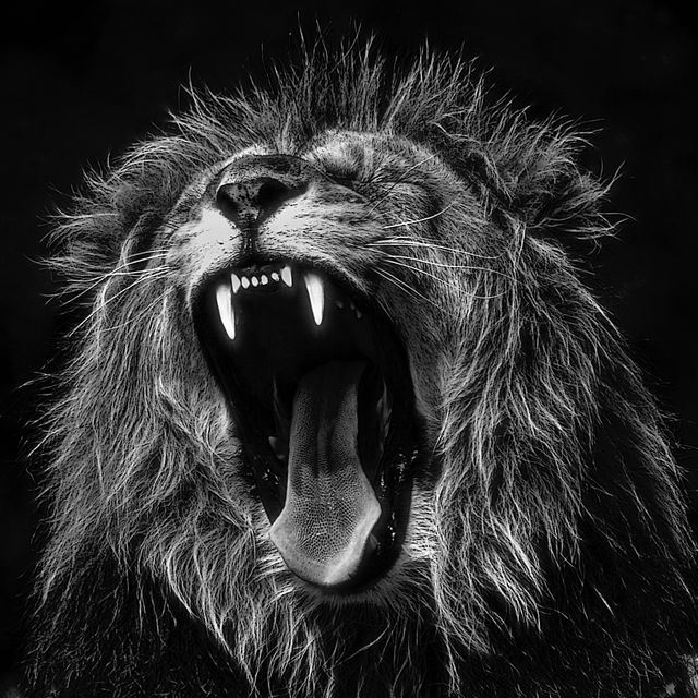 I am an angry customer. Hear me roar! featured image