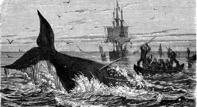 What is whaling and is it really worth $5 billion? featured image