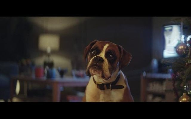 John Lewis Christmas Advert has landed! #BusterTheBoxer featured image