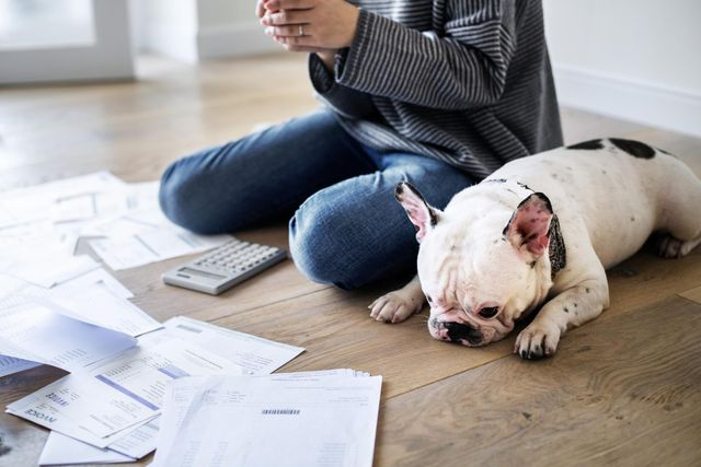 Pet insurance premiums rose by 22% between 2013 and 2018 featured image