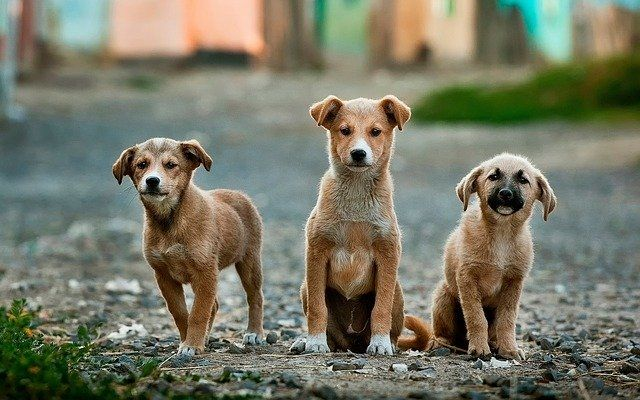 Bill to make animal cruelty a federal felony signed by President Trump featured image