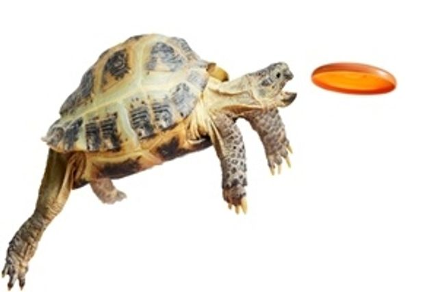 Slow and steady wins the marketing race featured image