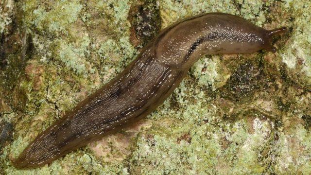 Slimy slugs inspire 'potentially lifesaving' medical glue featured image