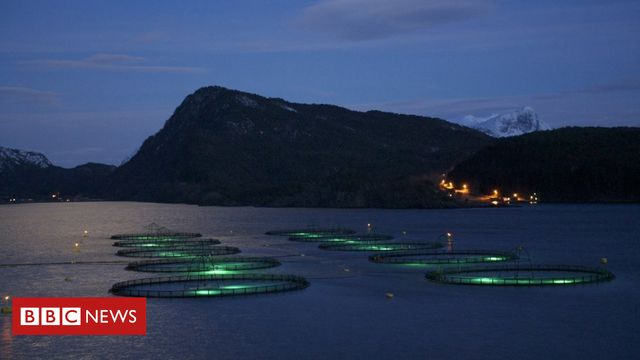 Marginal gains come to Norwegian fish farming featured image