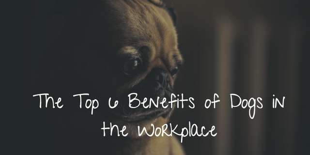 The top 6 benefits of letting your employees bring their dogs to work featured image