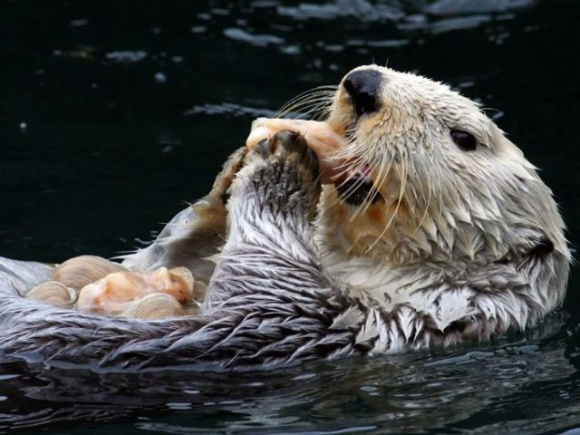 Sea Otters, Humans and Icthyosaurs featured image