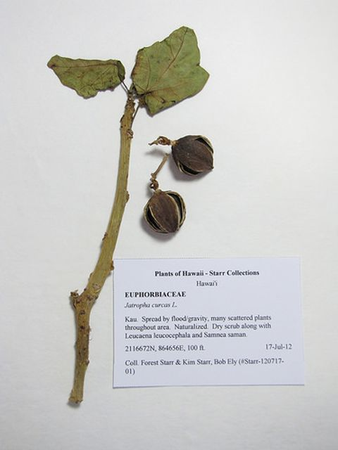 Fraudsters ordered to pay £1.3m compensation BUT investor losses >£20m in Jatropha tree scam featured image
