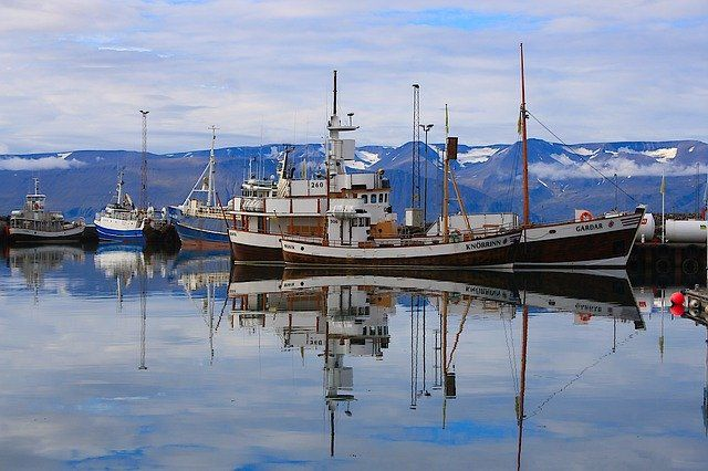 The fisherman's friends? featured image