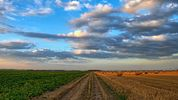 Agricultural Transition - How will proposals for delinking affect a landlord's Farm Business Tenancy negotiations and drafting?