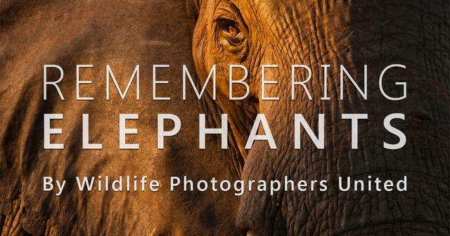 Remembering elephants featured image