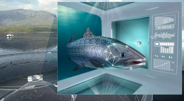 Give a man a fish and you feed him for a day. Teach an AI to recognise a fish... featured image