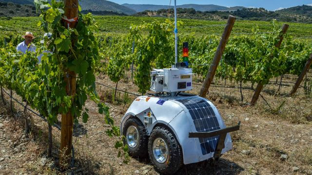 Winemakers tackle climate change and labour shortages with tech featured image