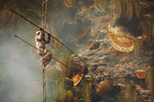 """""""If the name comes out, tourists will flock there"""". The secret world of Nepalese honey hunters. featured image"""
