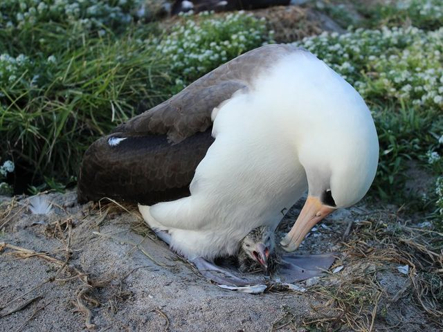 63 year old bird hatches a chick featured image