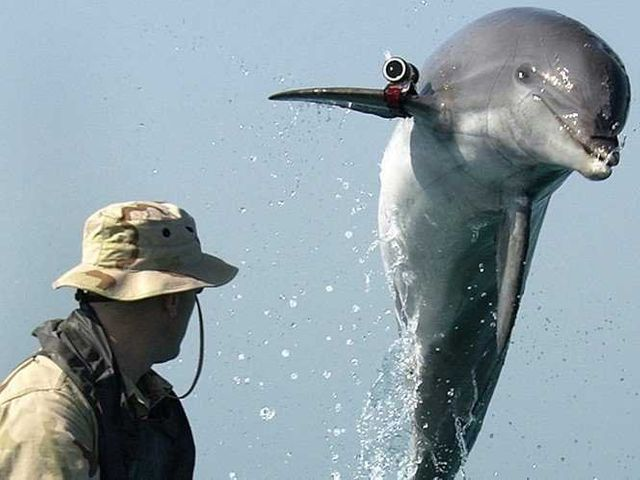 Ukraine's combat dolphins switch allegiance to Russia featured image