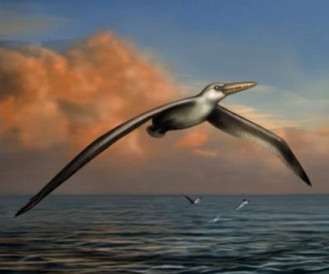 Big bird featured image